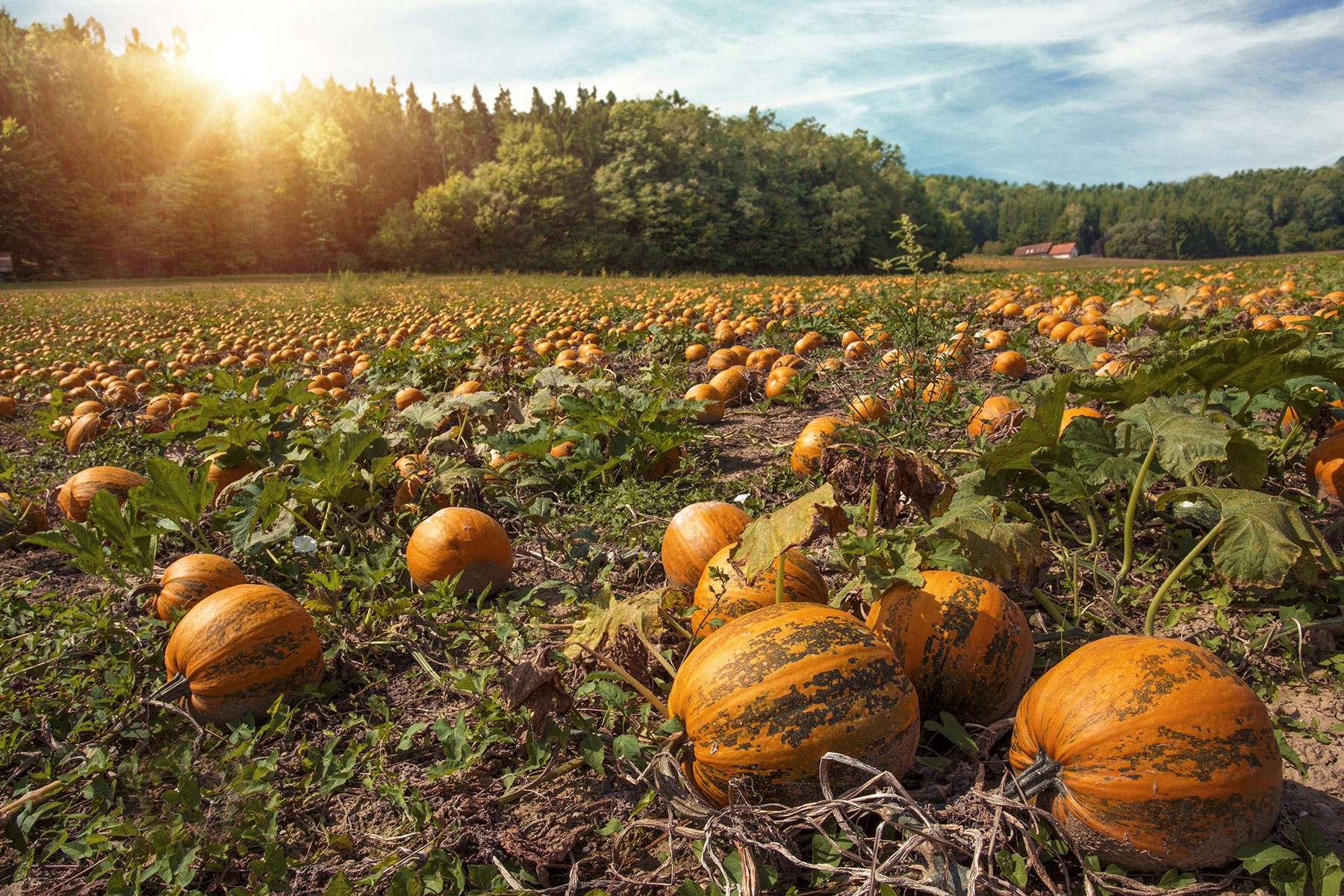 Visiolan Styrian Pumpkin Seed Oil Extract
